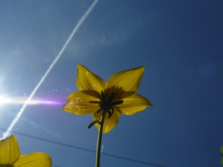 photo_soleil.jpg