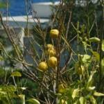 Gâteau citron mascarpone parfumé au Limoncello.